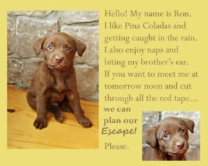 A cute dog can send a very tempting message. But don't buy it!