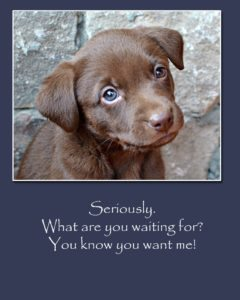Take unwanted animals to an animal shelter. they can find good homes!